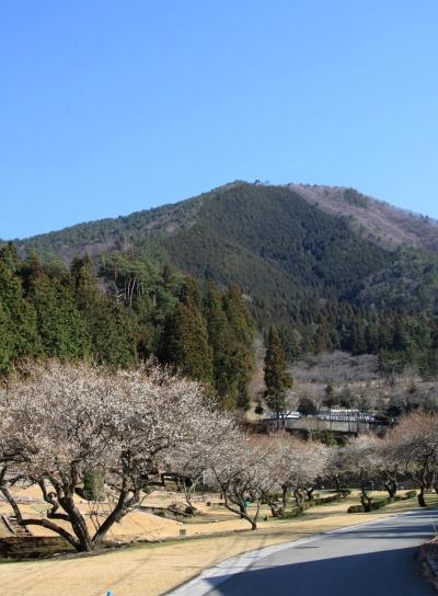 20120401momokurayama-002.JPG