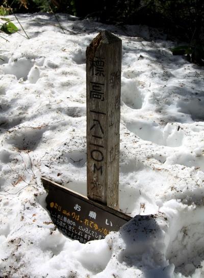 20120429tubakuro-008.jpg