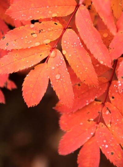 20121007kisokoma-011.jpg