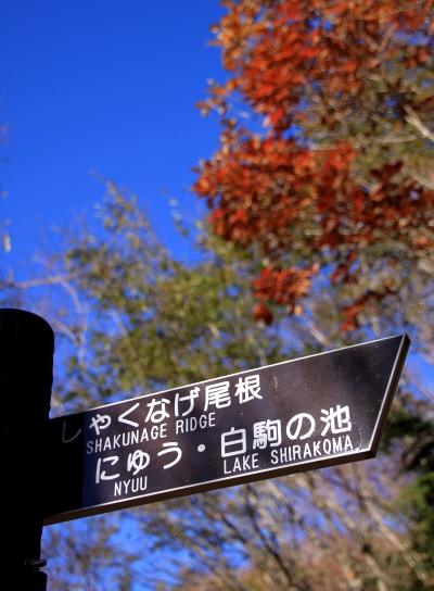 20121103shirakoma-004.jpg