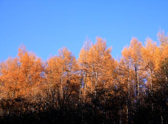 20121103shirakoma-029.jpg