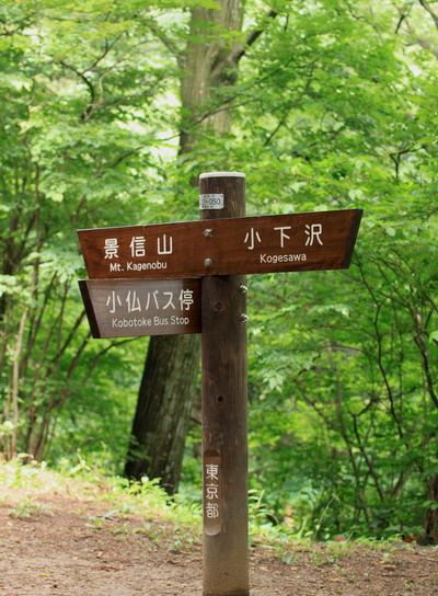 sokozawa20100714-005.jpg