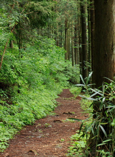 sokozawa20100714-013.jpg