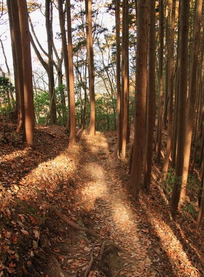 20111127bounoori-021.jpg