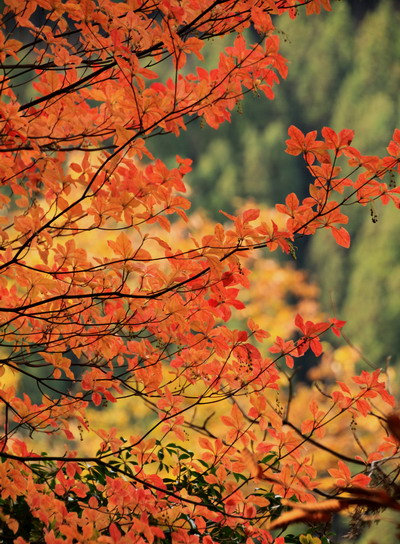 20111127bounoori-022.jpg