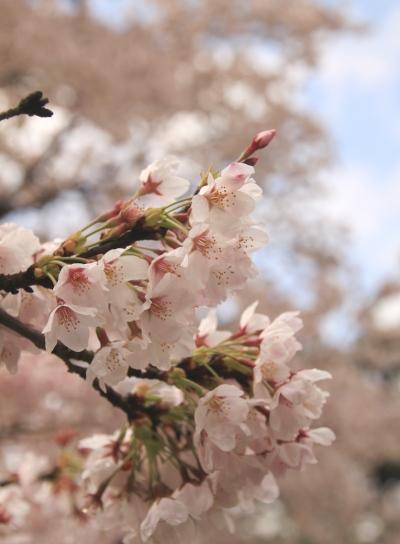 20120418kagenobu-001.jpg