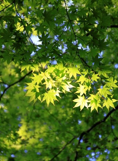 20120513jinba-006.jpg