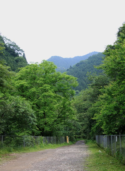 kogesawa20110621-001.jpg