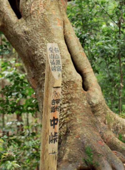 sokozawa20100714-014.jpg
