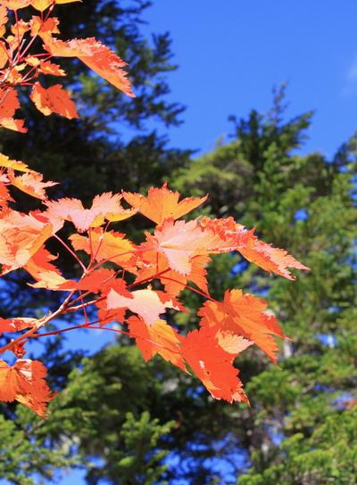 tubakuro20101002-006.jpg